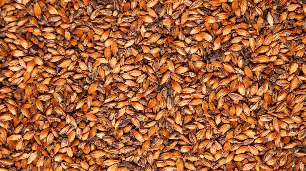 «Белсолод» закупает для «Лидского пива» пивоваренный ячмень на 6 млн долларов