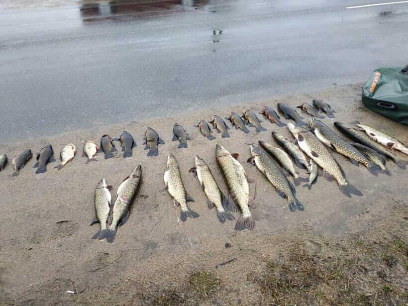 В Лидском районе задержан браконьер, который с помощью сетей выловил 14 щук и 13 линей