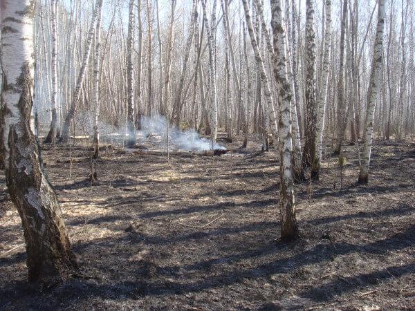 В Лидском районе ограничено посещение лесов