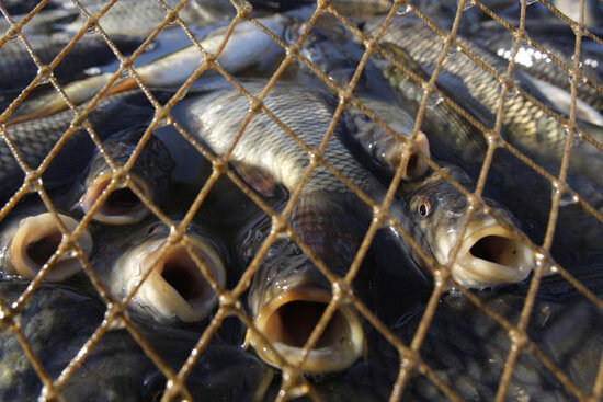 В Лидском районе за браконьером устроили погоню
