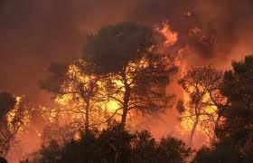 В белорусских лесах установлены 2-й и 3-й классы пожарной опасности